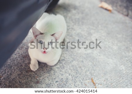 Street white cat sitting on cement floor. - stock photo