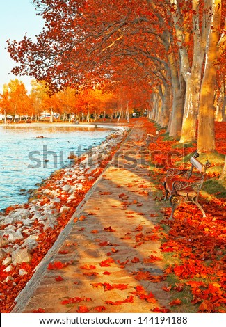 Street with leaves in autumn  - stock photo