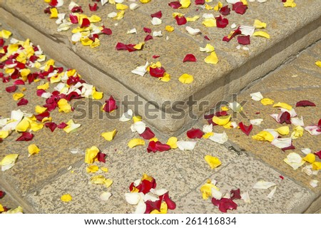 Strewn rose petals from wedding party, Antibes, France - stock photo