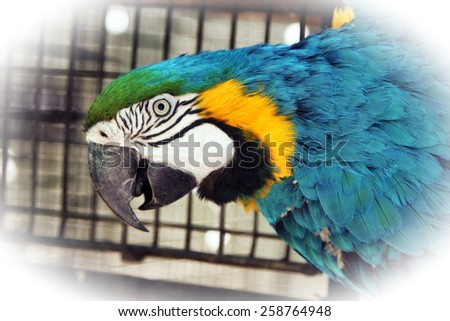 Striking Close-up portrait picture of colourful Macaw head with Special Effect - stock photo