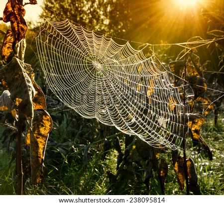 Strings of a spider's web in back light in forest - stock photo