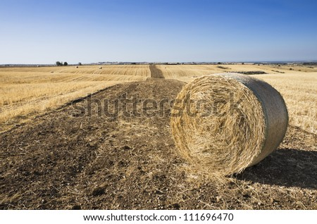 strip of land plowed in a crop wheat field