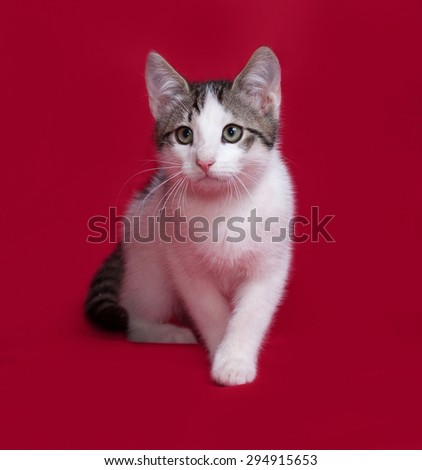 Striped and white kitten going on red background