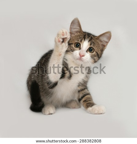 Striped and white kitten playing on gray background - stock photo