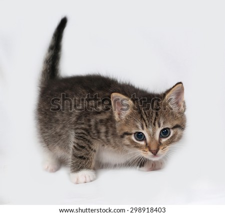Striped and white kitten standing on gray background