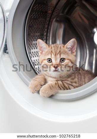 striped british kitten lying inside laundry washer - stock photo