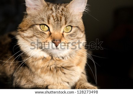 striped cat - stock photo