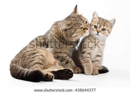 Striped cat and kitten (isolated on white)