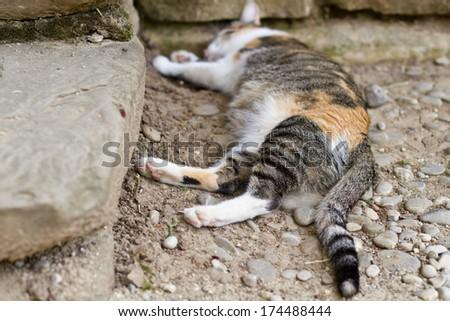 Striped cat is sleeping on ground - stock photo