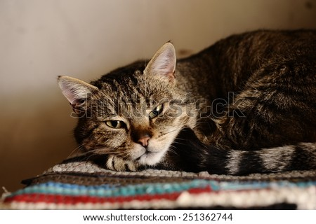 striped cat lies on a colorful rug - stock photo