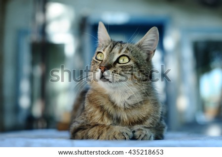 striped cat looking up, blue abstract background.