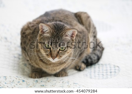 Striped cat lying on the bed.