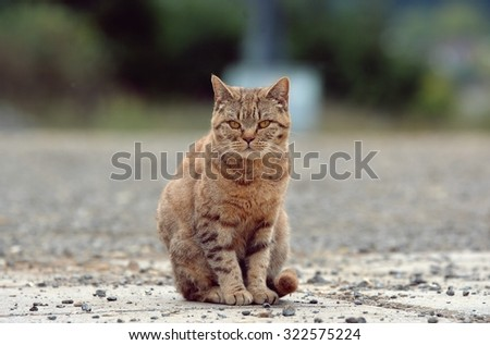 Striped cat on the street - stock photo
