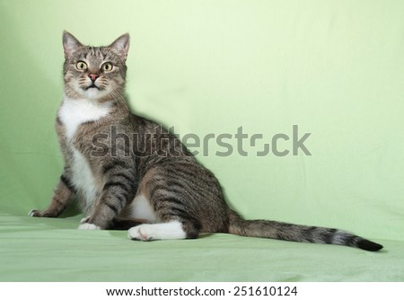 Striped cat sitting on green background