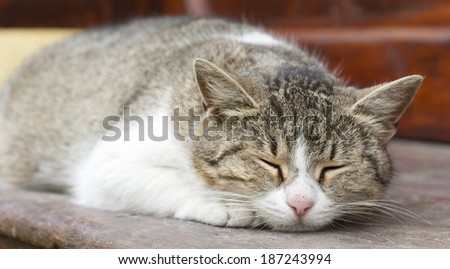 Striped cat sleeping or dreaming on a bench