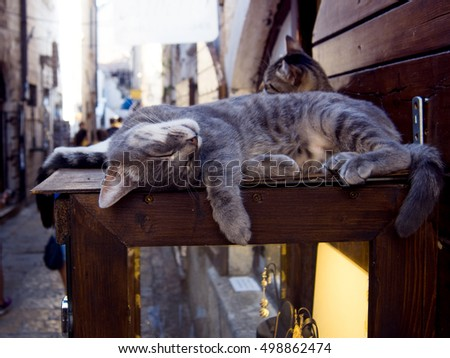 Striped cats are sleeping on storefront, tourist place