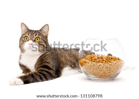 Striped, gray cat and a heap of dry food, isolated on white - stock photo
