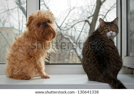 Striped, gray cat and dog  sitting on the window - stock photo