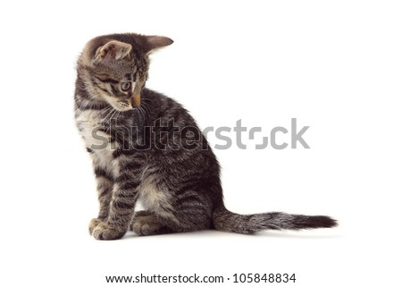 striped gray kitten sitting on a white background