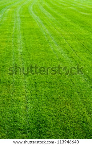 Striped green grass texture with perspective view - stock photo