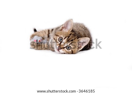 striped kitten and his mouse toys - stock photo