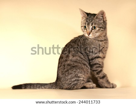 Striped kitten sitting on yellow background