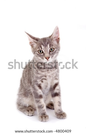striped kitten standing on a floor