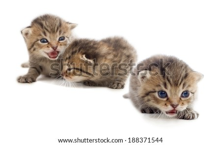 striped kittens