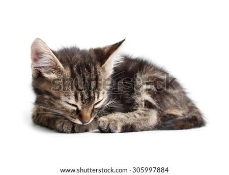 striped little kitten sleeping isolated on white background - stock photo