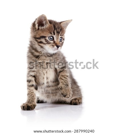 Striped lovely small domestic kitten on a white background. - stock photo