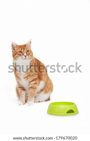 striped orange cat sitting next to a food bowl