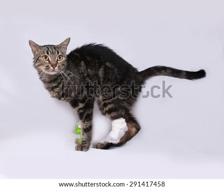 Striped sick cat catheter in leg standing on gray background - stock photo