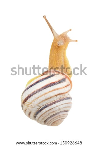 Striped snail on a green spine on white background - stock photo