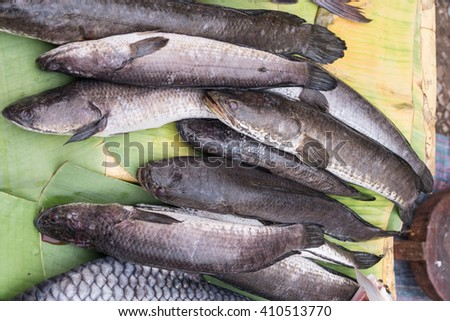 striped snakehead fish in local market,LAO - stock photo