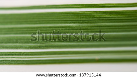 striped texture of a green leaf