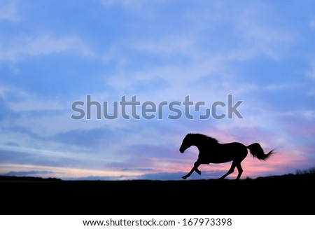 Strong gallop of horse at sunset silhouette  - stock photo