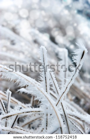 Strong icy grass with ice crystals - stock photo