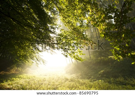 Strong sun rays through tall branches of trees in autumn - stock photo