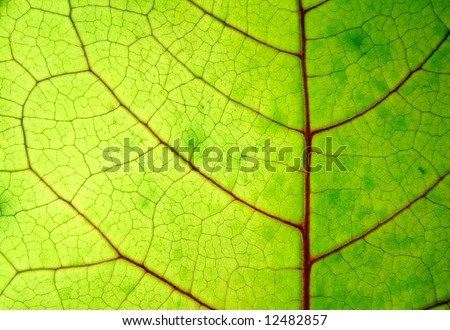 structure of a bright green leaf - stock photo