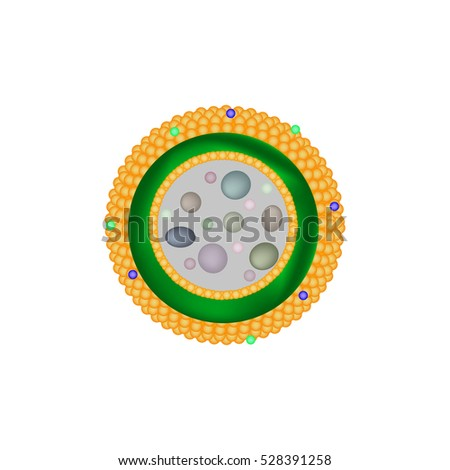 Lysosome Stock Images, Royalty-Free Images & Vectors