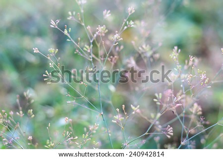Structures of flowering grass soft blur - stock photo