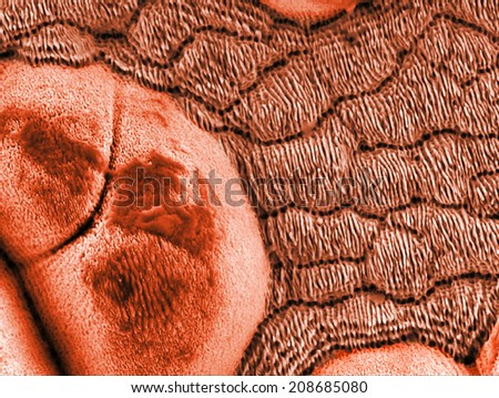 structures produced on a steel surface by short laser pulses - stock photo
