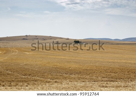 Stubble field in an agricultural landscape in Ciudad Real Province, Spain