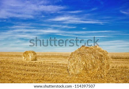 Stubble field with hay rolls under blue sky