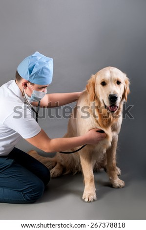 student spends auscultation dog - stock photo