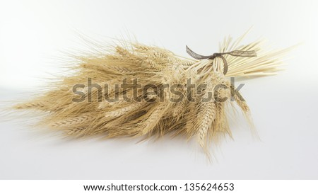 Studio close up shot of bundle of wheat isolated on white background with light shadow