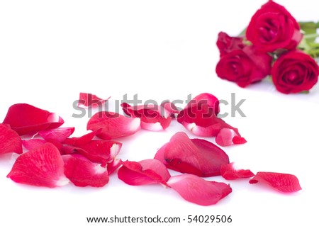 studio close up shot of red rose flower and petals