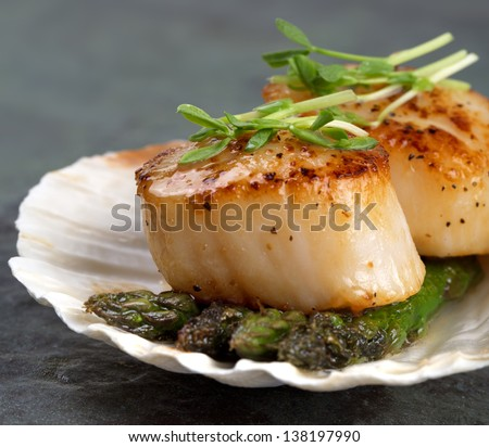 Studio closeup of seared scallops, garnished with pea shoots and served on a bed of asparagus, presented on a scallop shell. - stock photo