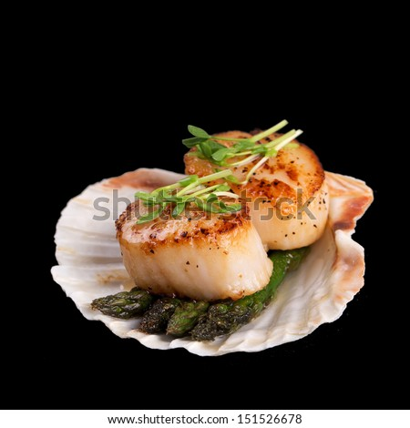 Studio closeup of seared scallops, garnished with pea shoots and served on a bed of asparagus, presented on a scallop shell. Isolated on black background. - stock photo