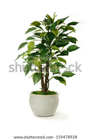 Studio image of a miniature artificial tree in a pot. Concept image for interior design or office furniture use against a white background. Copy space. - stock photo